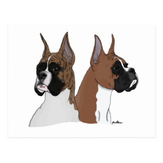 Fawn and Brindle Boxers Postcard