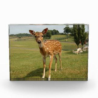 Fawn Baby Deer Award