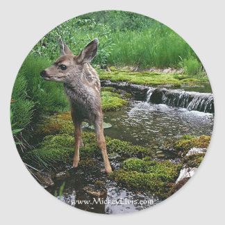 Fawn Baby Deer Lost Classic Round Sticker