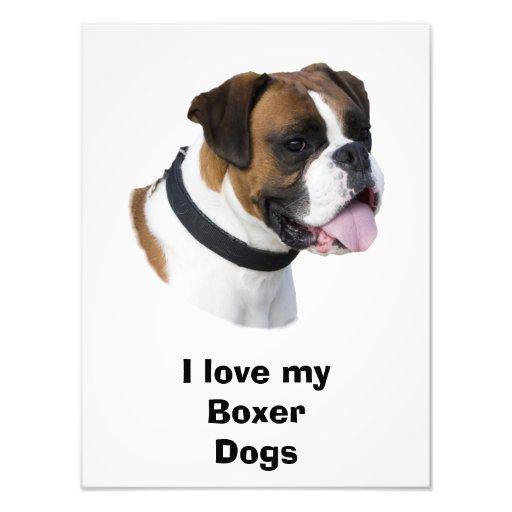 Fawn Boxer dog pet photo