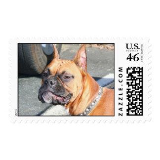 Fawn Boxer Dog Postage
