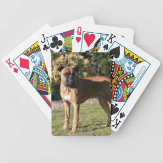 Fawn Boxer Dog Standing Bicycle Poker Cards
