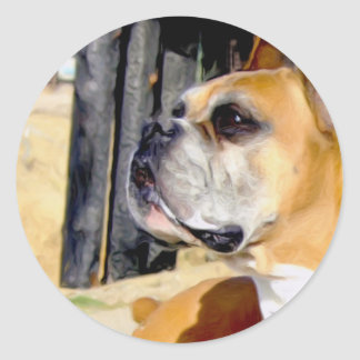 Fawn Boxer Dog stickers