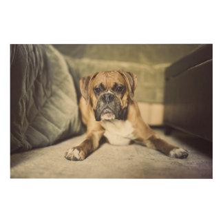 Fawn boxer pup laying down. wood wall art