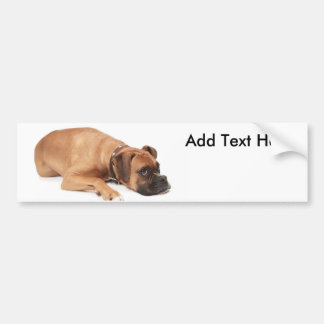 Fawn Boxer Resting Car Bumper Sticker