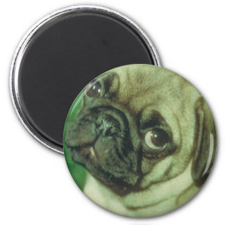 Fawn Chinese Pug 2 Inch Round Magnet