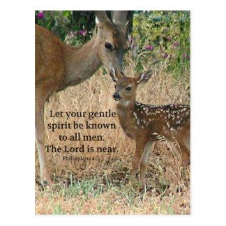 Fawn Deer Nature Wildlife Christian Creationarts Postcard