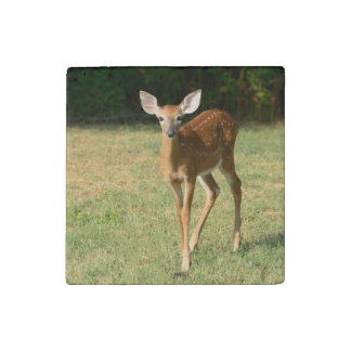 Fawn Deer Stone Magnet