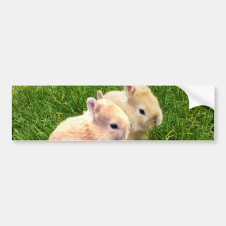 Fawn Dwarf Bunny Rabbits, Bumper Sticker