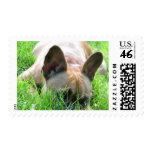 Fawn French Bulldog Stamps
