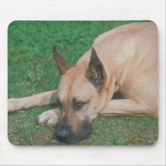 Fawn Great Dane Mouse Pad
