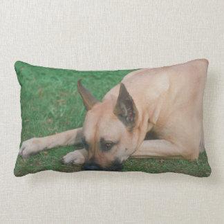 Fawn Great Dane Pillow