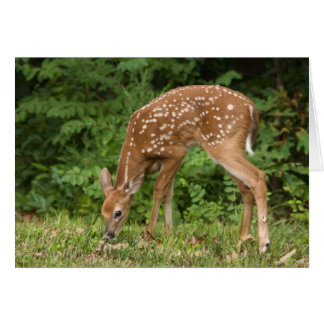 Fawn Greeting Card No. 1