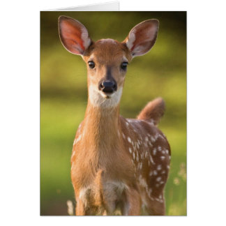 Fawn Greeting Card No. 2
