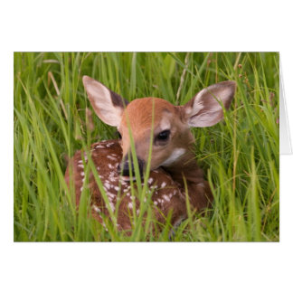 Fawn Greeting Card No. 3