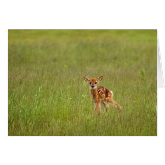 Fawn Greeting Card No. 4