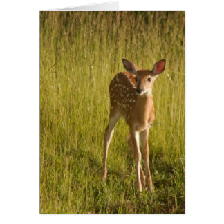 Fawn Greeting Card No. 5