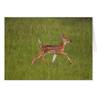 Fawn Greeting Card No. 7