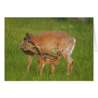 Fawn Greeting Card No. 8