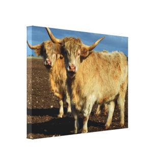 Fawn Highland Cows, Canvas Print
