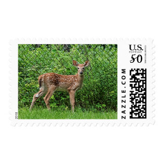 Fawn in front of a fence postage