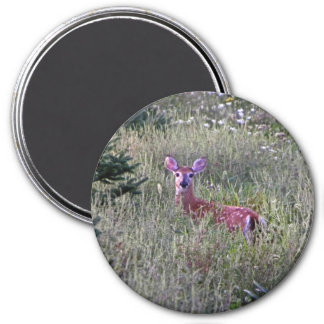 Fawn in Grass Magnet