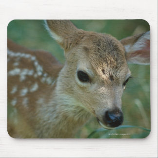 Fawn in Grass Mouse Pad