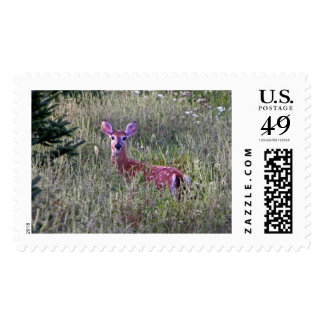 Fawn in Grass Postage Stamps