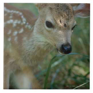 Fawn in Grass Tile
