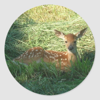 Fawn in New Mown Hay Classic Round Sticker
