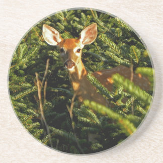 Fawn in Pine Trees Coasters