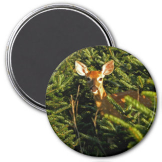 Fawn in Pine Trees Magnet