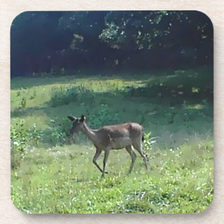 Fawn in the Meadow Beverage Coaster
