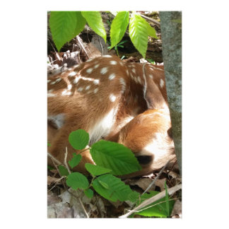 Fawn in the Woods Stationery