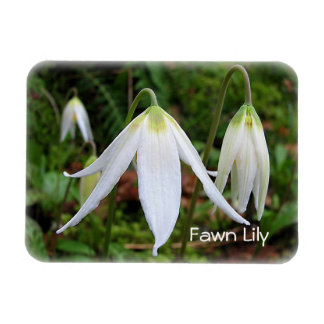 Fawn Lily magnet