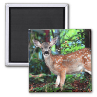 Fawn 2 Inch Square Magnet