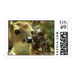Fawn Postage Stamp
