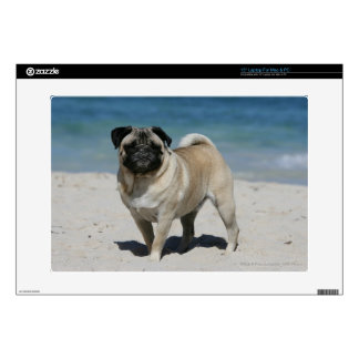 """Fawn Pug at the Beach 15"""" Laptop Decals"""