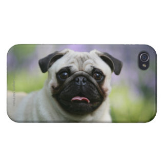 Fawn Pug on Alert Covers For iPhone 4
