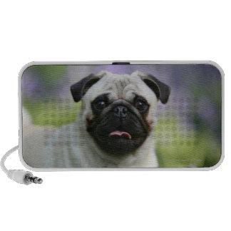 Fawn Pug on Alert Laptop Speakers