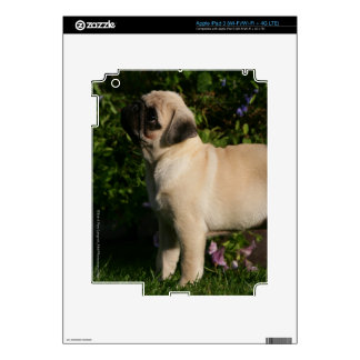 Fawn Pug Profile Decals For iPad 3