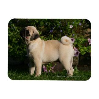 Fawn Pug Profile Rectangular Photo Magnet
