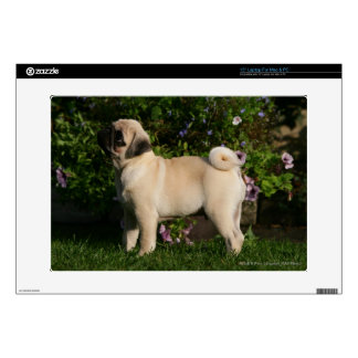 "Fawn Pug Profile 15"" Laptop Skins"