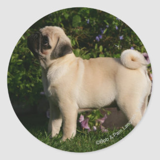 Fawn Pug Profile Round Stickers
