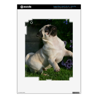 Fawn Pug Puppy Decal For iPad 3