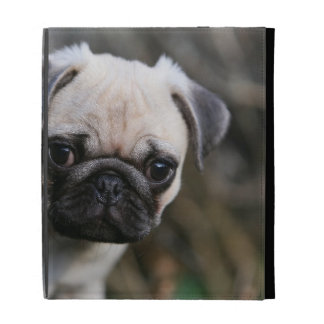Fawn Pug Puppy Headshot iPad Folio Covers