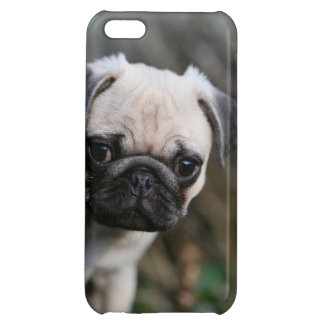 Fawn Pug Puppy Headshot iPhone 5C Cover