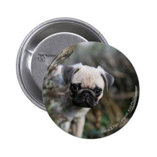 Fawn Pug Puppy Headshot Pinback Button