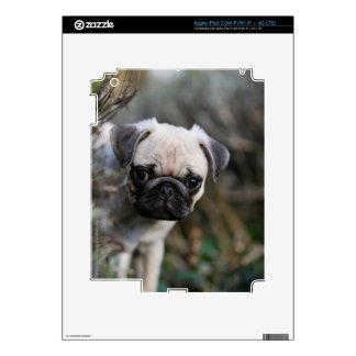 Fawn Pug Puppy Headshot Skins For iPad 3