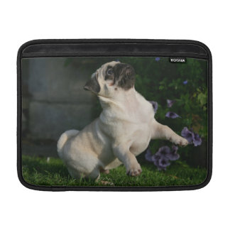 Fawn Pug Puppy MacBook Sleeves